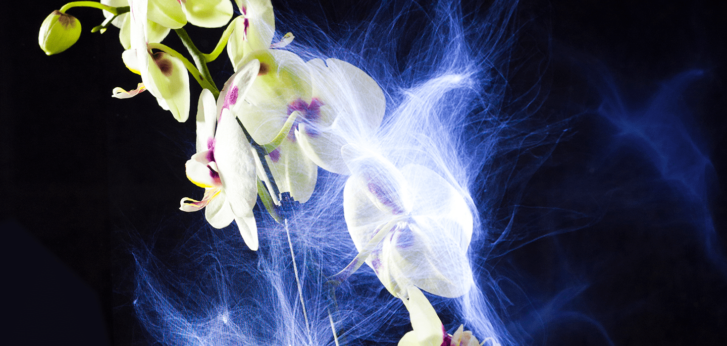 An orchid hemmed by Botanicus' visualization